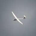It was such a treat to see this glider circling around.